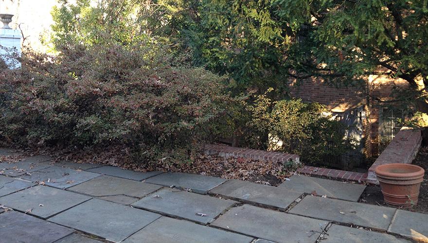 Wesley Heights Washington DC Garden Transformation by Everett Garden Designs