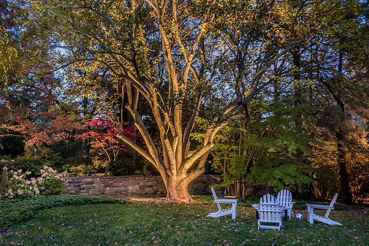 Chairs under tree