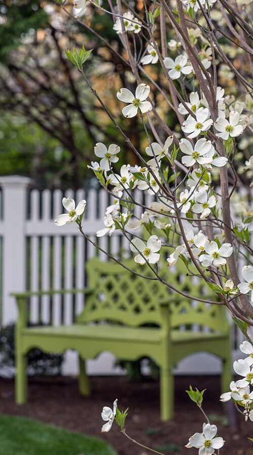 Garden bench with spring dogwood