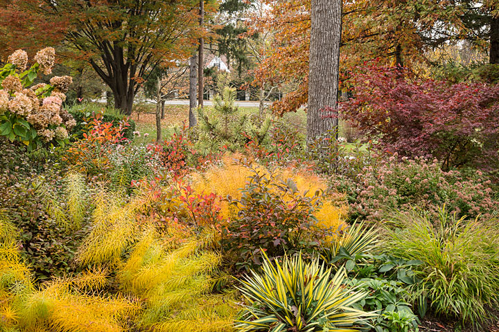 Fall colors in garden